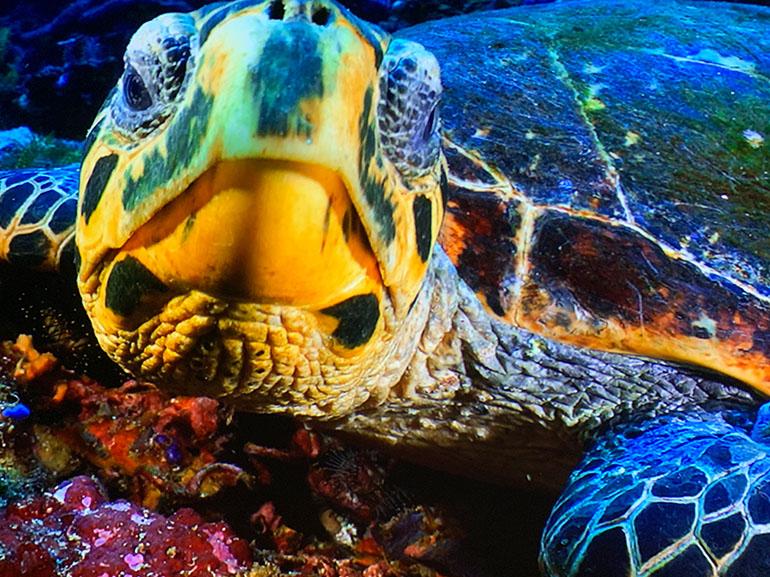 Idée de sortie à Paris : SeaLife, un tour du monde de la faune marine en île-de-france