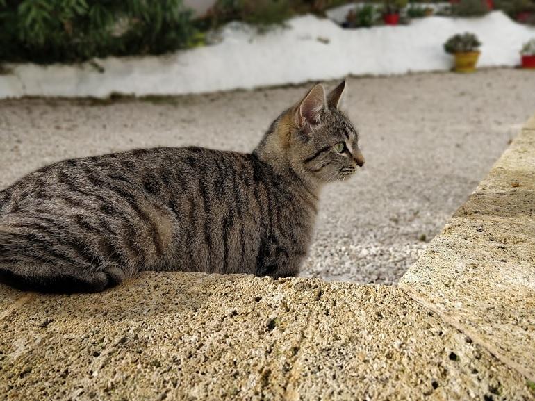 Votre chat vous agace ? Des chercheurs ont créé cette musique pour le calmer - CNET France