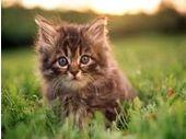 Des chatons pour piéger les employés imprudents sur le web