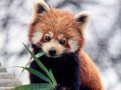Firefox 37 : du mieux pour les vidéos en HTML5