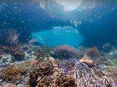 Street View : encore plus de fonds marins à observer