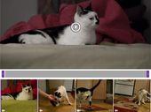 L'application de montage vidéo Adobe Premiere Clip est portée sur Android