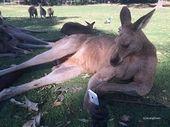 Free Mobile : le roaming est désormais inclus chez les kangourous