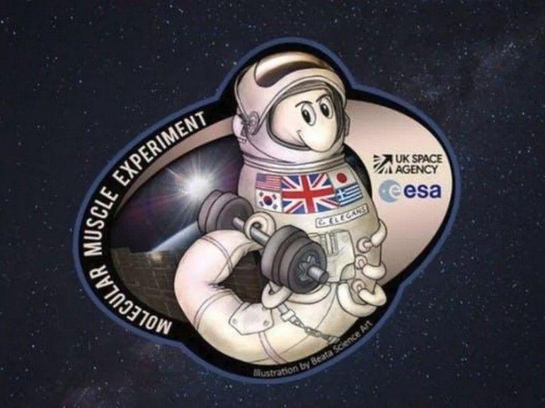Espace : pourquoi envoyer des vers de terre dans la Station spatiale internationale ?