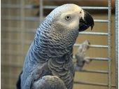 Ce perroquet utilise une Amazon Echo pour passer des commandes...sur Amazon