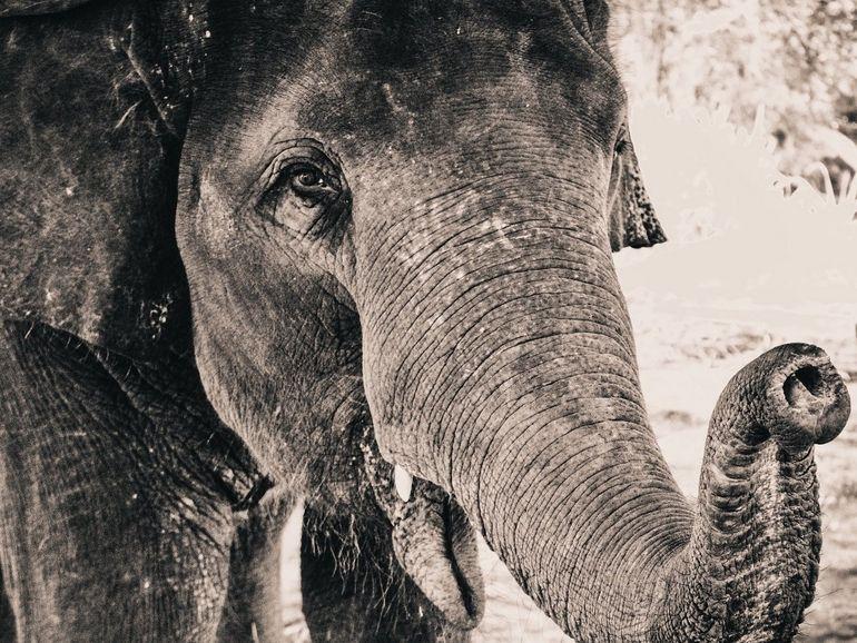 Des éléphants recensés depuis l'espace grâce à des satellites et au deep learning