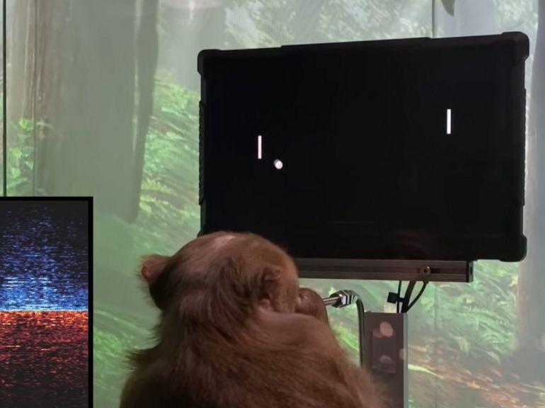 Neuralink présente un singe jouant à Pong grâce à l'implant cérébral d'Elon Musk