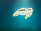 Pollution plastique : des océans sans poissons en 2050 ?