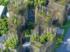 IA, fermes et forêts verticales : les villes se végétalisent pour devenir durables