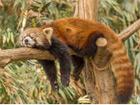 Firefox peut-il survivre dans un monde Google ?