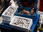 Comment la blockchain d'IBM pourrait assurer la traçabilité de la pêche en Norvège