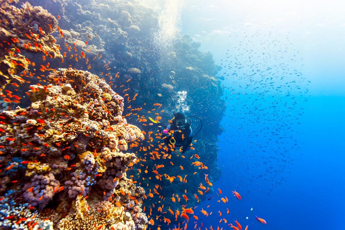 La collecte de données pourra-t-elle sauver la Grande Barrière de corail ?