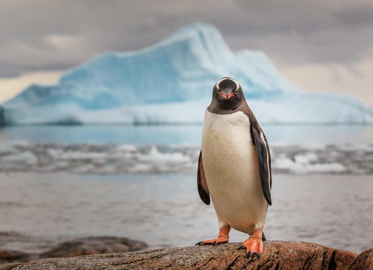 Fibre: L'Australie planche sur la construction d'un câble sous-marin vers l'Antarctique