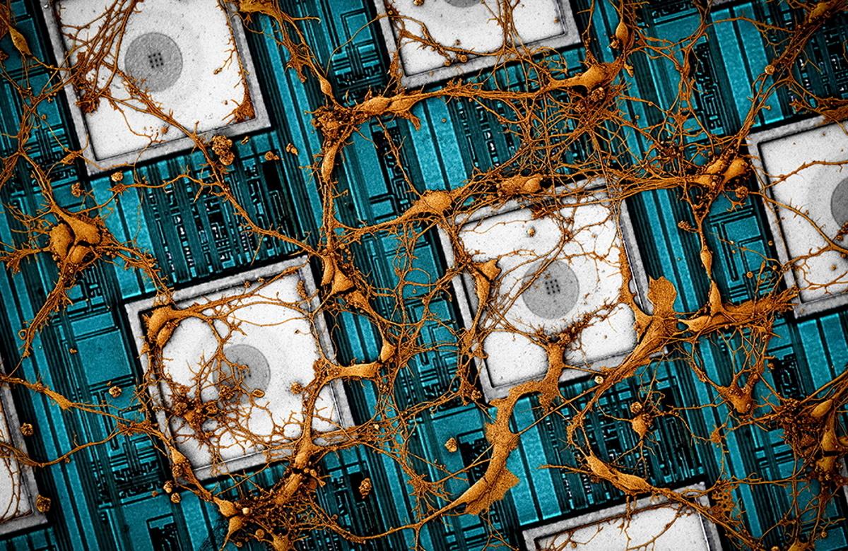 Samsung veut copier-coller un cerveau