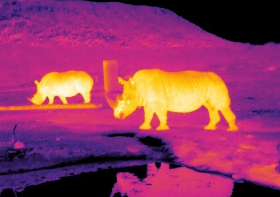 Les caméras thermiques, solutions face à l'augmentation des collisions avec les animaux?
