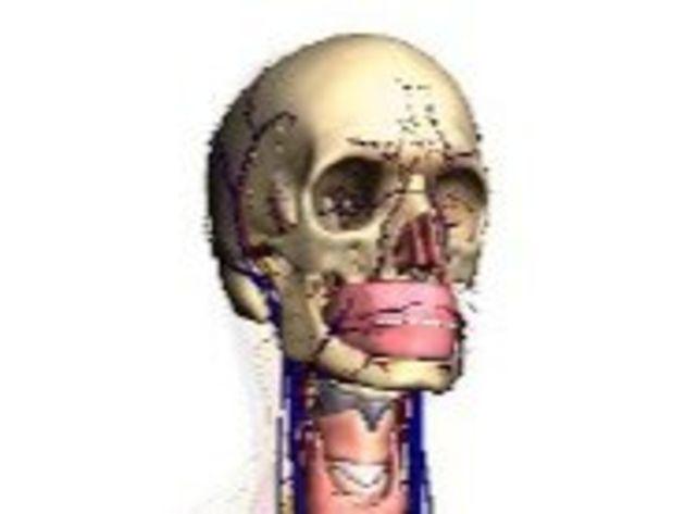 Web 3D : Google nous plonge dans le corps humain avec Body Browser