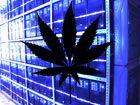 Google bannit de Google Play les applications qui vendent de la marijuana