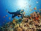 Intel et Accenture s'associent pour sauver les récifs coraliens