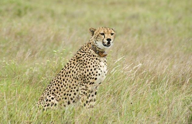 Comment l'IoT se porte au secours des espèces en voie de disparition