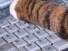 Le clavier nouveau est arrivé