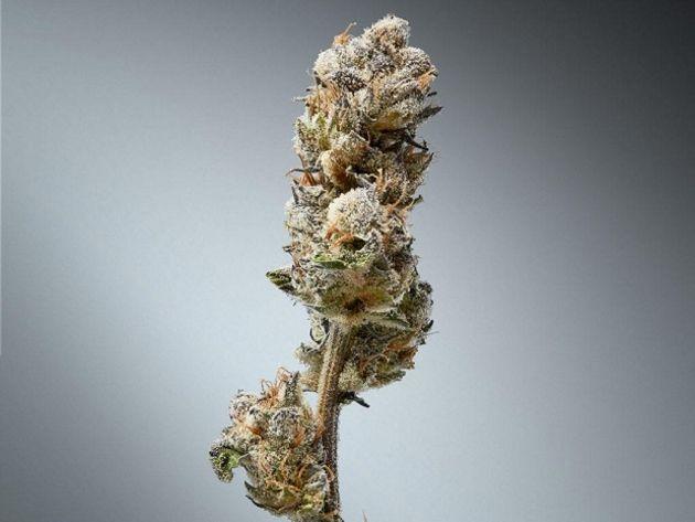 Une société propose un système d'authentification du cannabis
