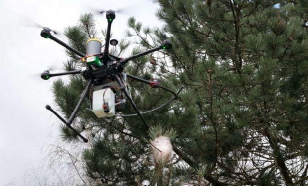 Agritech : des drones pour lutter contre la chenille processionnaire du pin
