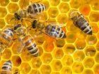 L'internet des objets au secours des abeilles