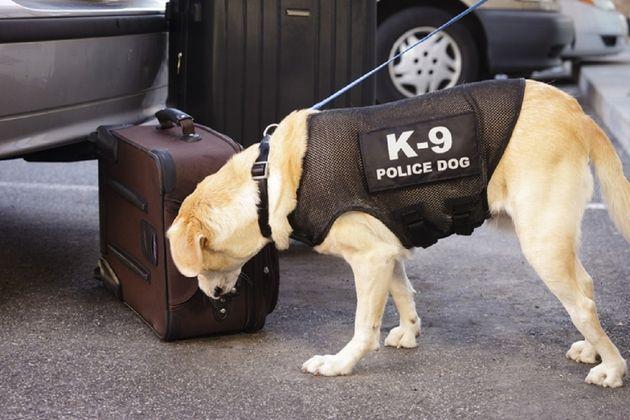Le matériel électronique bientôt confronté au flair des chiens policiers?