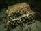 Des plongeurs découvrent une machine Enigma au fond de la mer Baltique