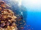 La collecte de données pourra-t-elle sauver la Grande Barrière de corail?