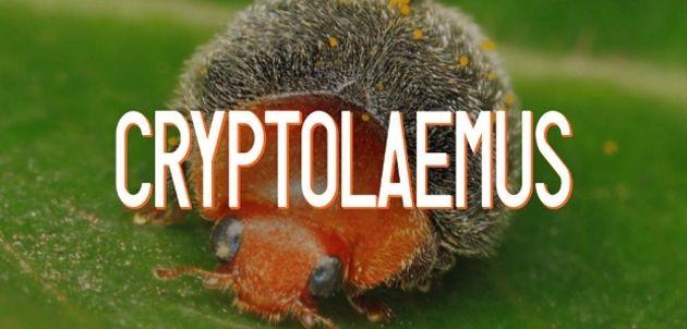 Cryptolaemus: le groupe d'experts en cybersécurité qui lutte contre Emotet