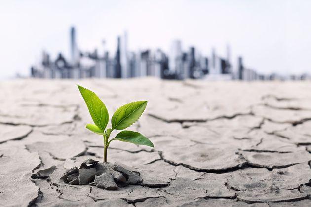 Ecologie: Amazon va investir 2milliards de dollars dans les technologies durables