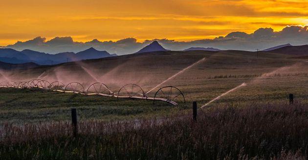 Plus de 100systèmes d'irrigation laissés exposés en ligne